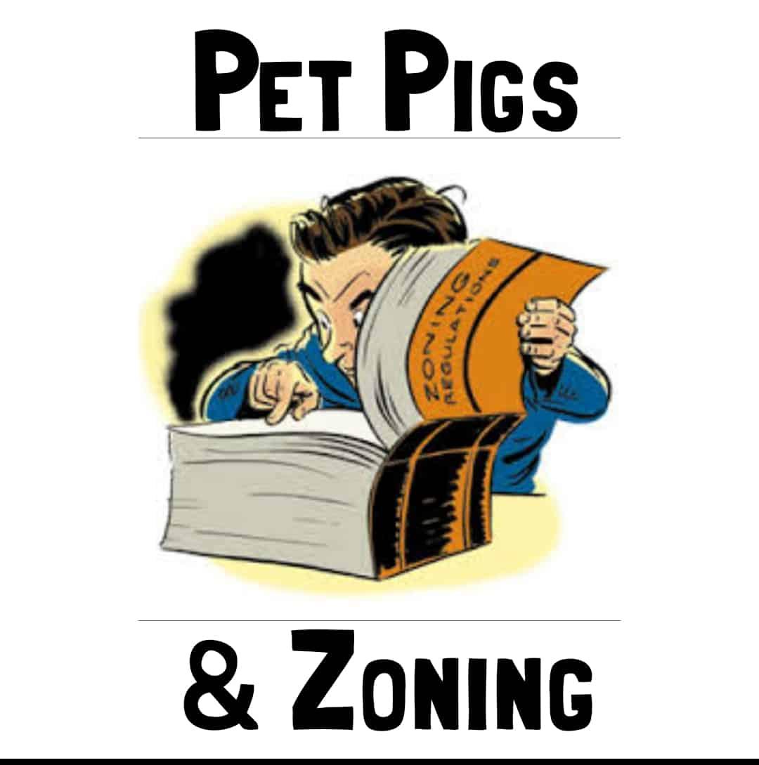 Zoning, pet pig zoning