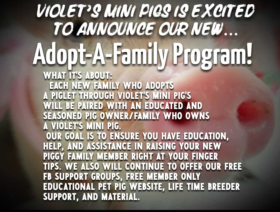 Adopt A Family - Violet's Mini Pigs